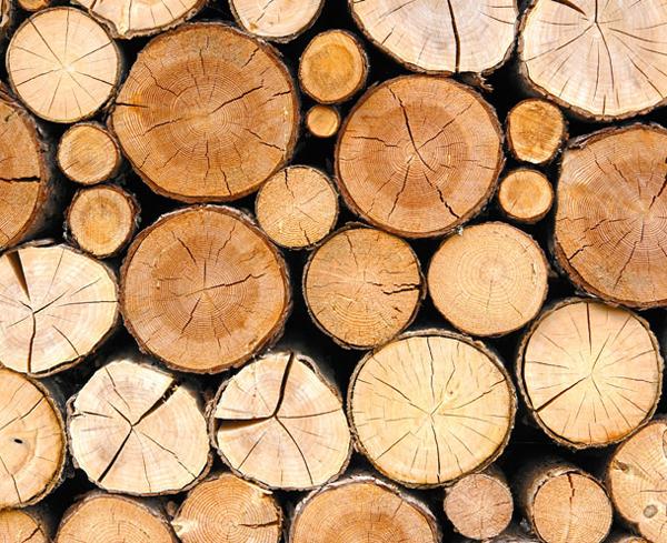 Mondholz in der Forsthofalm
